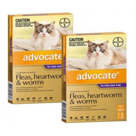 Advocate Large Cat (Purple)