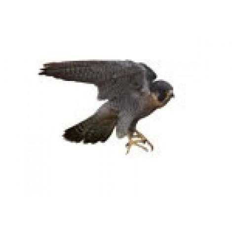 Falcon Multivet Tablets 50's