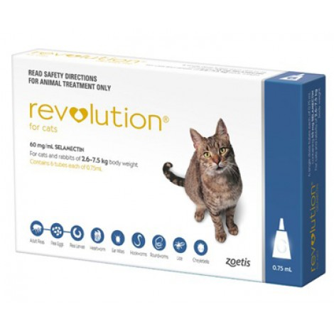 Revolution Cat (Blue)