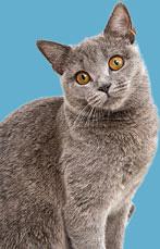 Cat Intestinal Wormers