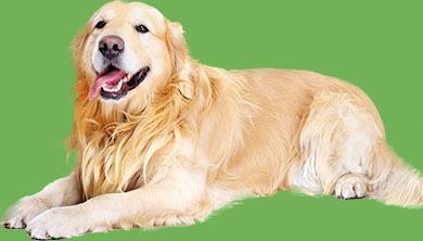 Dog Fleas & Ticks