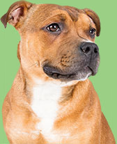 Dog Intestinal Wormers